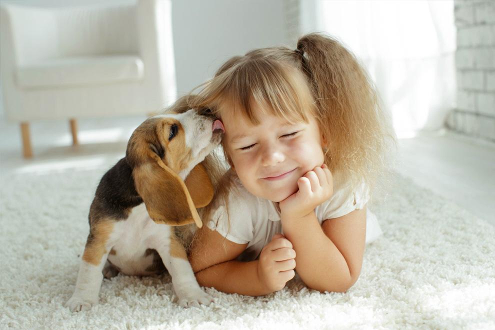 Mordeduras de perro: cómo reducir el riesgo